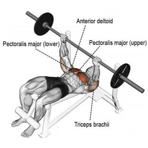 stunning-decline-bench-press-tittle-5a4691128887d.jpg
