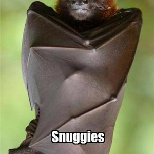 funny-pictures-bat-snuggles.jpg