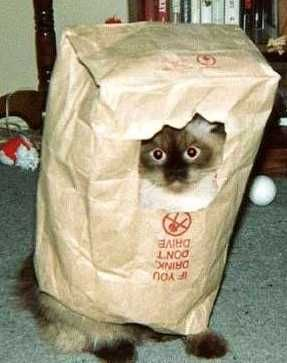 bagged_cat.jpg